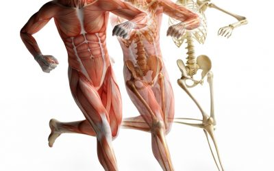 The Wonders Of Fascia